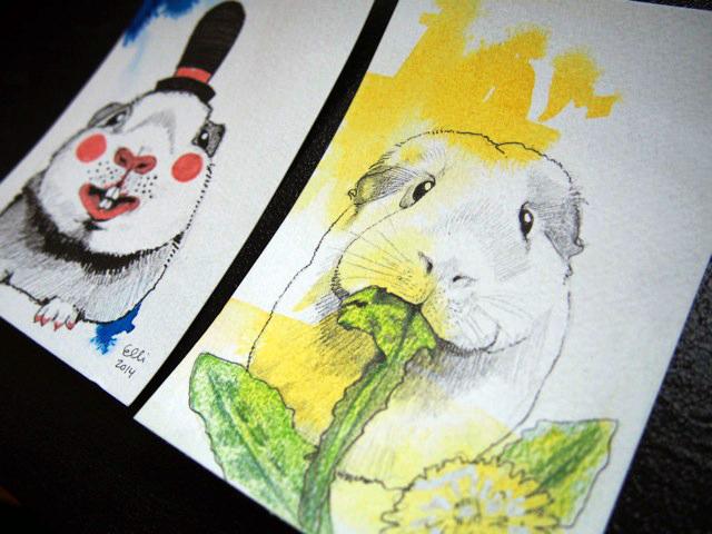 guinea_pig_ellimaanpaa_drawing_2014_1