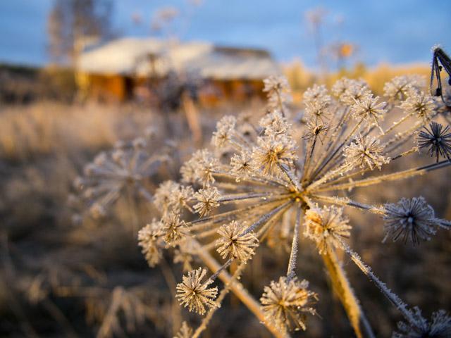 waiting-for-the-winter-sleep_elli-maanpaa_2015